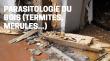 E-learning : DIAG08 Parasitologie du bois (termites, mérules...)