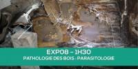 E-learning EXP08 : Parasitologie du bois (Termites, mérules...)